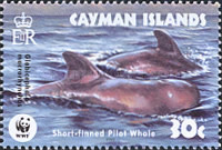 [Endangered Species - Short-finned Pilot Whale, Typ AFH]