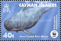 [Endangered Species - Short-finned Pilot Whale, Typ AFI]