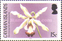 [Orchids, Typ AGK]