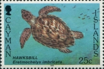 [Sea Turtles - White Frame, Typ WL]