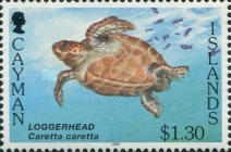 [Sea Turtles - White Frame, Typ WN]