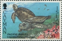 [Sea Turtles - White Frame, Typ WO]