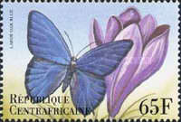 [Butterflies from Around the World, type CLI]