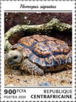 [Fauna - Turtles, Typ MKW]