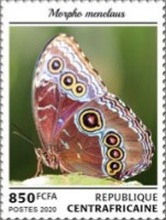 [Insects - Butterflies, Typ MLN]