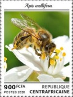 [Insects - Bees, Typ MMM]