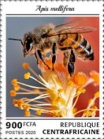 [Insects - Bees, Typ MMN]