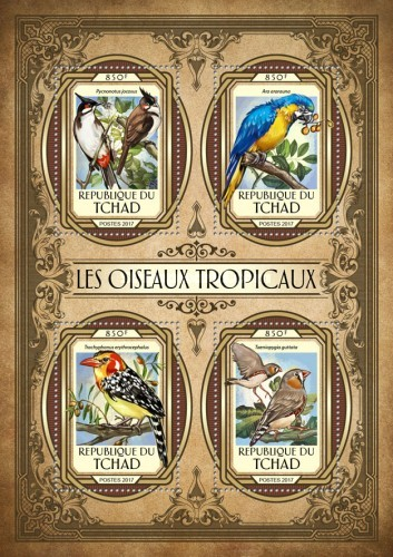 [Tropical Birds, type ]