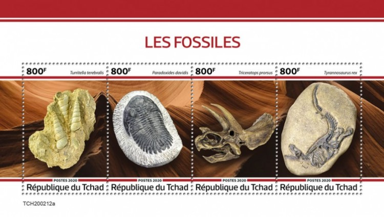 [Fauna - Fossils, type ]
