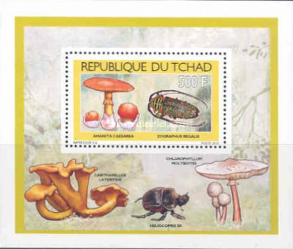 [Mushrooms & Insects, type BZY1]