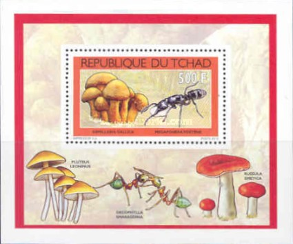 [Mushrooms & Insects, type BZZ1]
