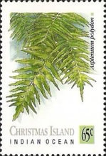 [Ferns, type JG]