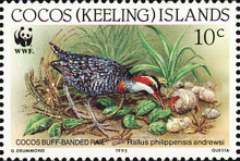 [Birds - Endangered Species - Buff-banded Rail, type JG]