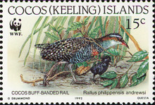 [Birds - Endangered Species - Buff-banded Rail, type JH]
