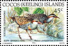 [Endangered Species - Buff-banded Rail, type JK]