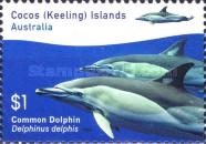 [Marine Life - Dolphins, type ST]