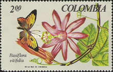 [National Orchid Congress and Tropical Flora and Fauna Exhibition, Medellin, Typ AFD]