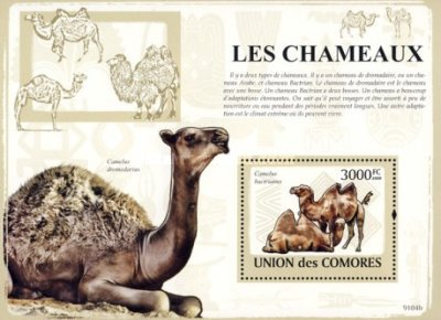 [Camels, type ]