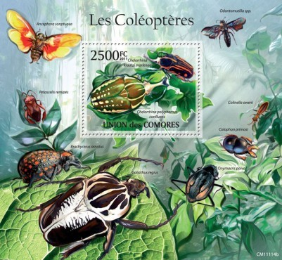[Insects - Beetles, Typ ]