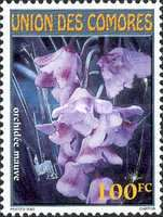 [Orchids, type BOV]