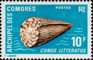 [Seashells, type DG]