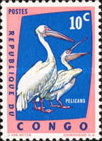 [Protected Birds, type DR]