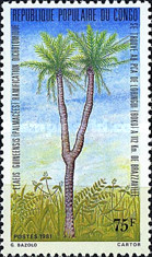 [The Twin Palm Tree of Louingui, Typ AEE]