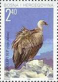 [Birds - White-Headed Vulture, type AR]