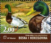 [Birds of Hutovo Blato, type HF]