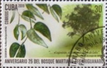 [The 25th Anniversary of the Ariguanabo Martí Forest, type JVA]