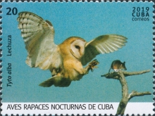 [Birds - Owls, type JVP]