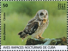 [Birds - Owls, type JVR]