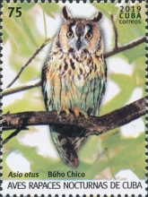 [Birds - Owls, type JVS]