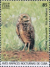 [Birds - Owls, type JVT]