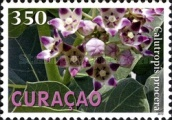 [Plants of Curacao, type GW]