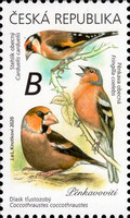 [Songbirds, type ANT]