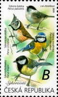 [Songbirds, type ANU]