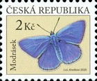 [Insects - Butterflies, type AOR]