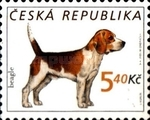 [Dogs, type KG]