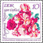 [International Rose Exhibition, type BAH]