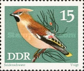 [Protected Songbirds, Typ BCY]