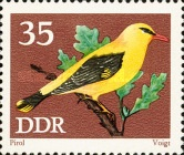[Protected Songbirds, Typ BDB]