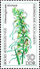 [Orchids, Typ BOF]