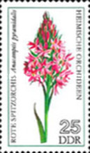 [Orchids, Typ BOH]