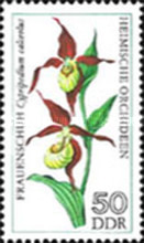 [Orchids, Typ BOK]