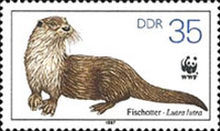 [Protected Animals - European Otter, type CYS]