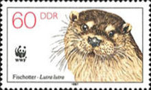 [Protected Animals - European Otter, type CYT]