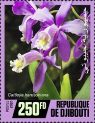 [Flowers - Orchids, Typ DQS]