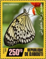 [Insects - Butterflies, Typ DRI]