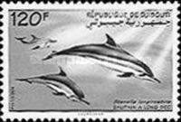 [Spinner Dolphins, Typ NQ]
